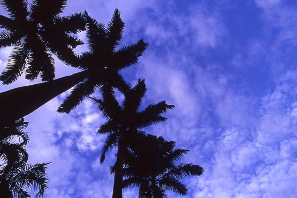 椰子の木と空