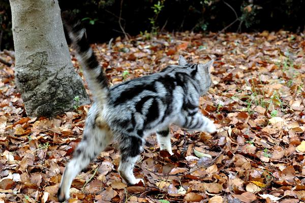 山田池公園 猫