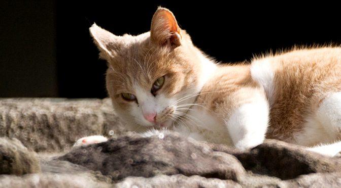 山田池公園の猫 500mm