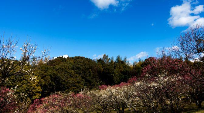 山田池公園 梅林