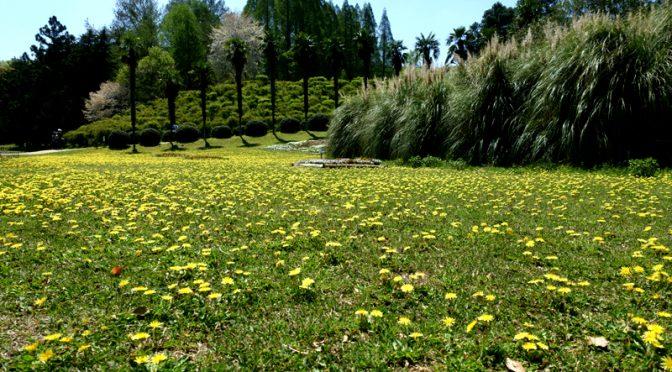 大阪市立大学植物園 私市植物園