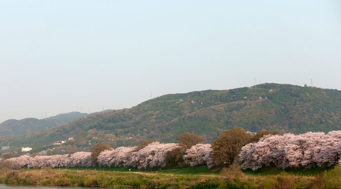 ミニベロ M451R で桜を見に行く