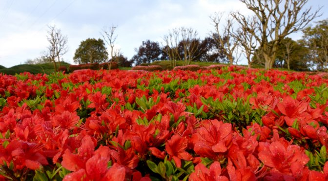 ツツジ 山田池公園
