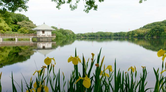 山田池公園 花菖蒲園