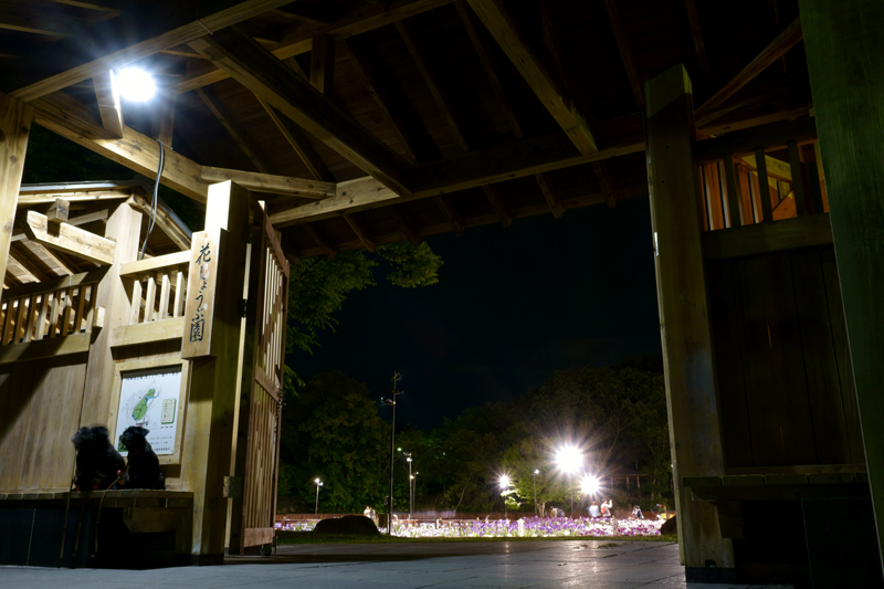 山田池公園 花しょうぶ園
