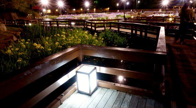 花しょうぶ園 ライトアップ