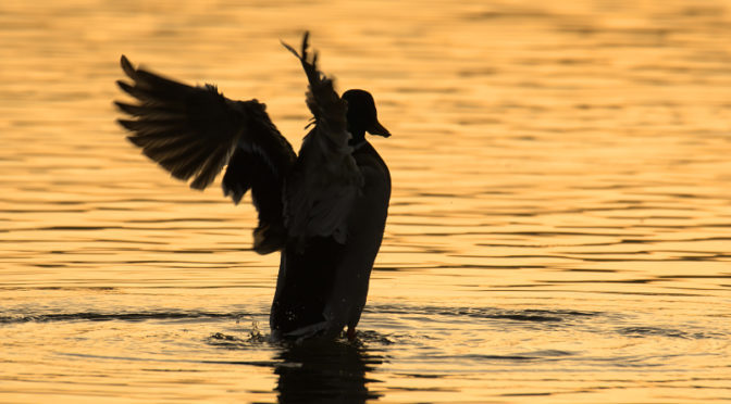 水上のダンサー