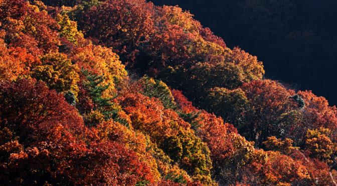 交野山の紅葉