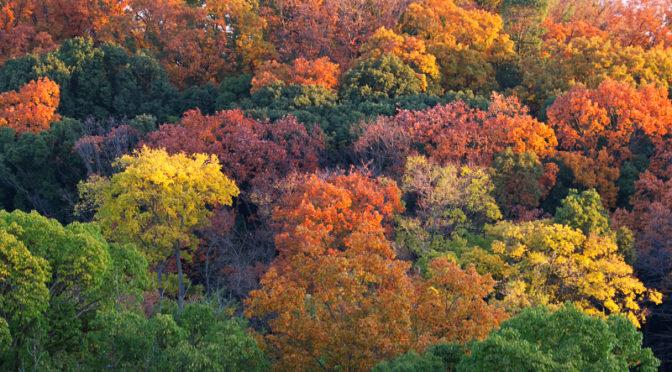 色づく山田池公園とカルガモ