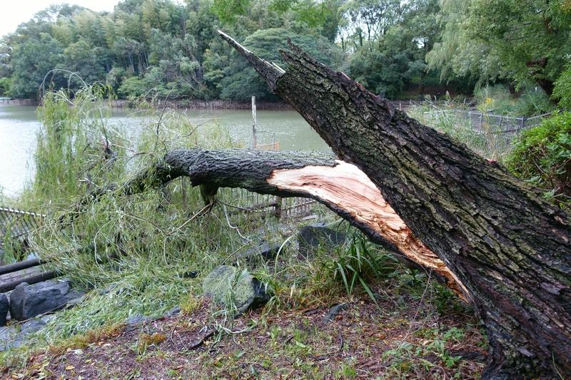 山田池 台風 倒木