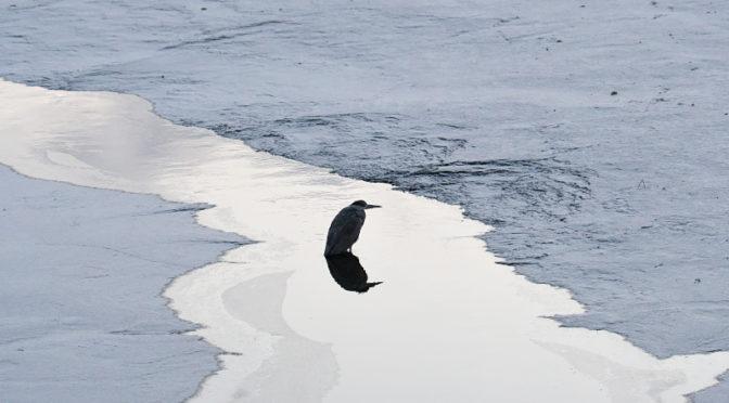 凍てつく山田池